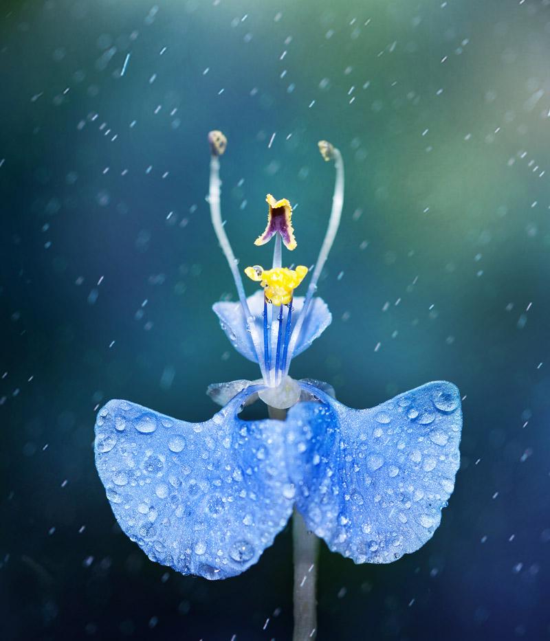 Vũ điệu hoa – Võ Hoài Huy / VIETNAM