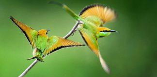 Chủ đề Động vật hoang dã cuộc thi ảnh môi trường xanh 2015