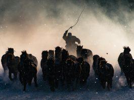 Chăn ngựa ở Mông Cổ của nhiếp ảnh gia Anthony Lau